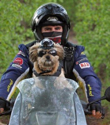 Пёс-россиянин вступил в мотоклуб - Фото 2
