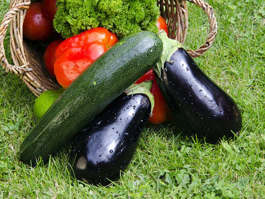 Баклажан и кабачок - витаминный заряд для организма!