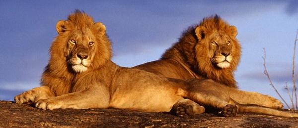 5 историй о животных, которые спасли людей от неминуемой смерти
