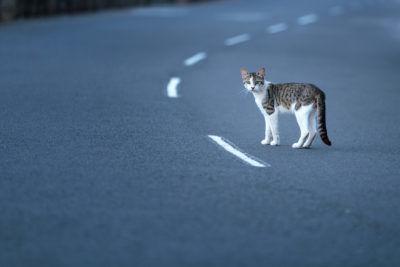 Смерть в одиночестве – почему кошки не хотят умирать дома
