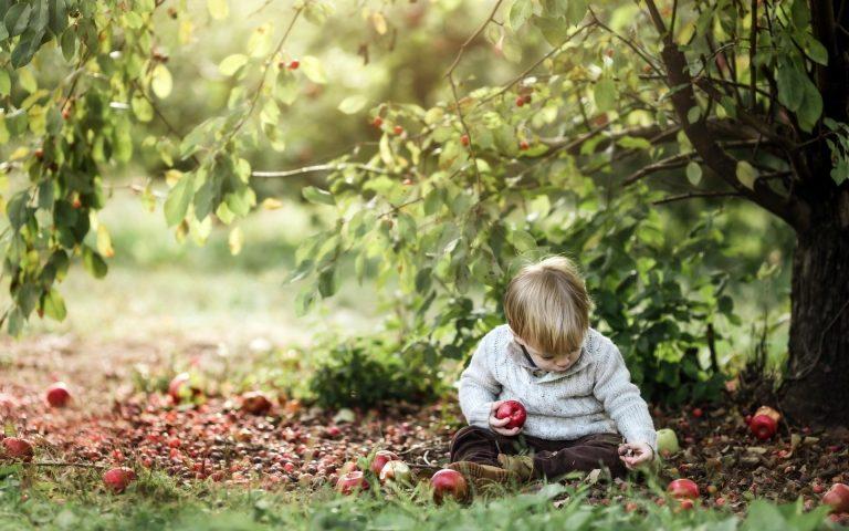 Притча: Яблоня и мальчик