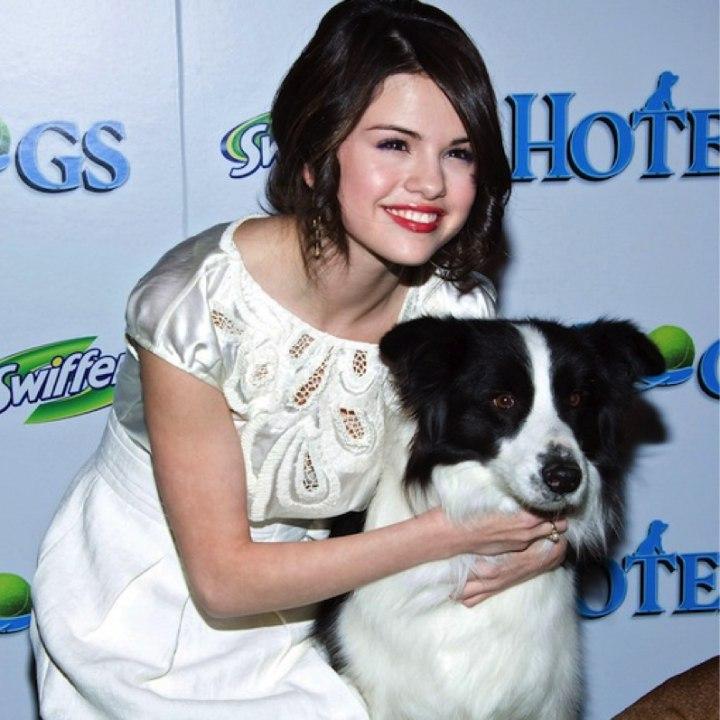 Селена Гомес дарит дом и любовь брошенным собакам