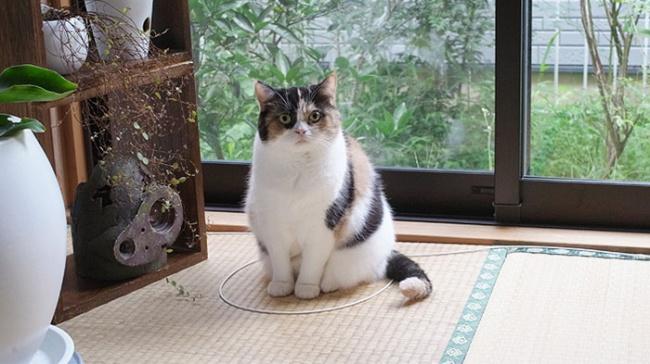 Как обмануть своего кота