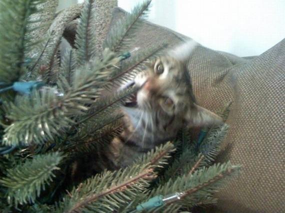 Похитители Рождества (24 фото)