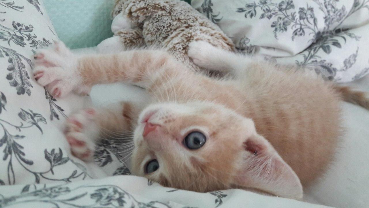 Берите котиков домой, с котиками теплее и веселее.