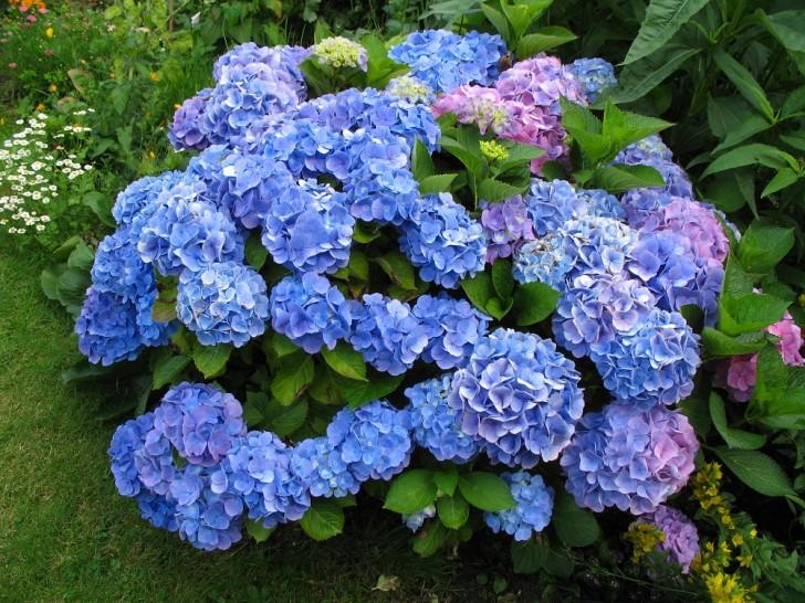 Самые дорогие цветы в мире. Топ-9