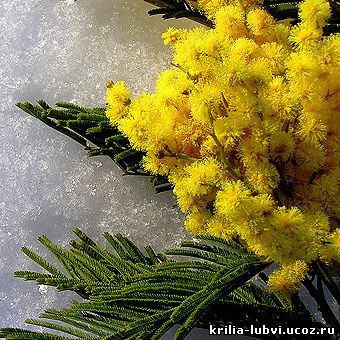 Значение цветов. Какие цветы подарить девушке, другу, маме, сотруднице, бабушке, жене, любовнице