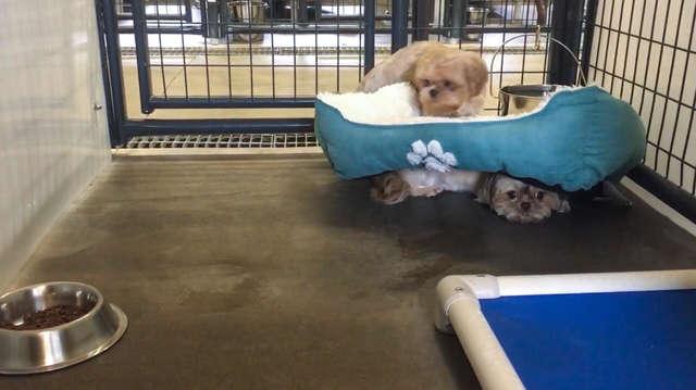 Две маленькие собачки так сильно боялись людей, что прятались от них под лежанку