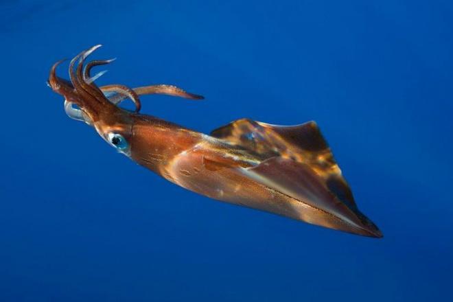 На плаже в Новой Зеландии нашли гигантского кальмара