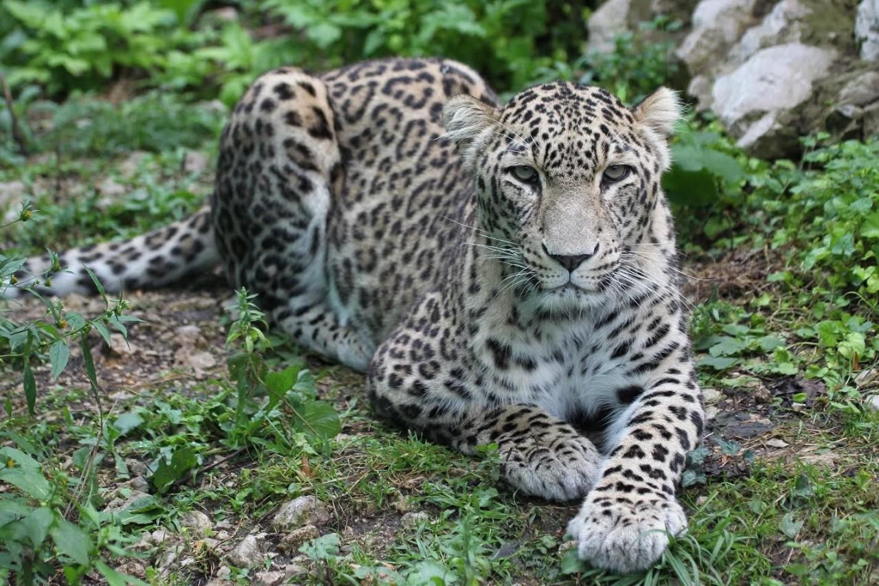 Кавказ выпускает диких зверей
