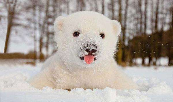 1-animals-and-first-snow-baby-polar-bear__700