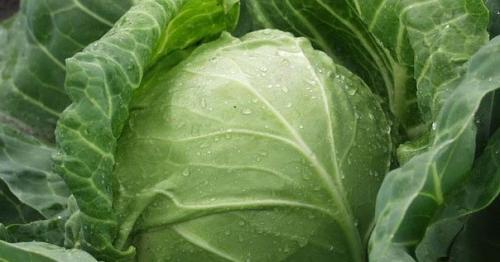 7 продуктов с «Овощной Полки», которые очищают организм лучше, чем любые лекарства.