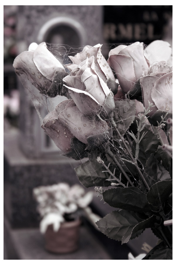 Необычные фотографии с розами