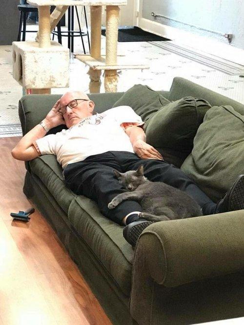 История про дедушку, который ежедневно засыпает в приюте для кошек во время вычесывания спасенных животных