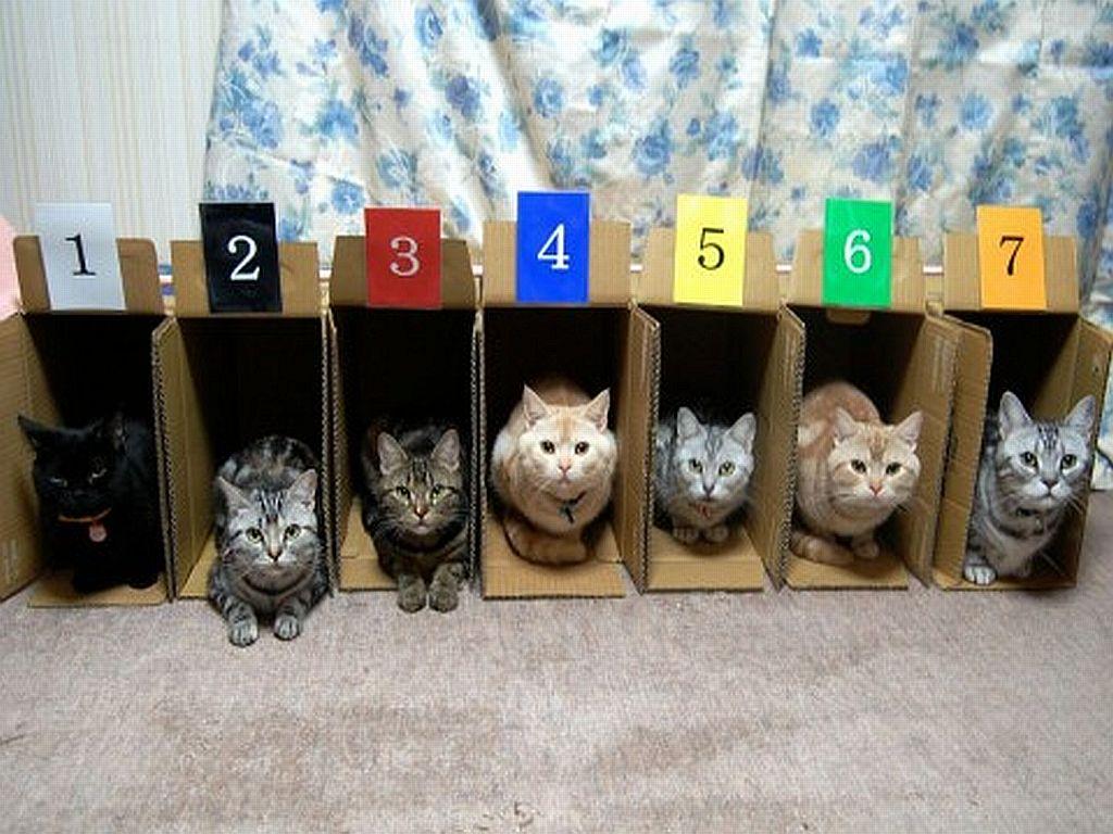 Хранение и упорядочивание котов)