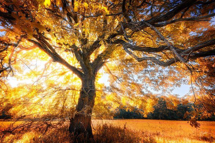 Гипнотическая поэзия природы, фотограф Janek Sedlar