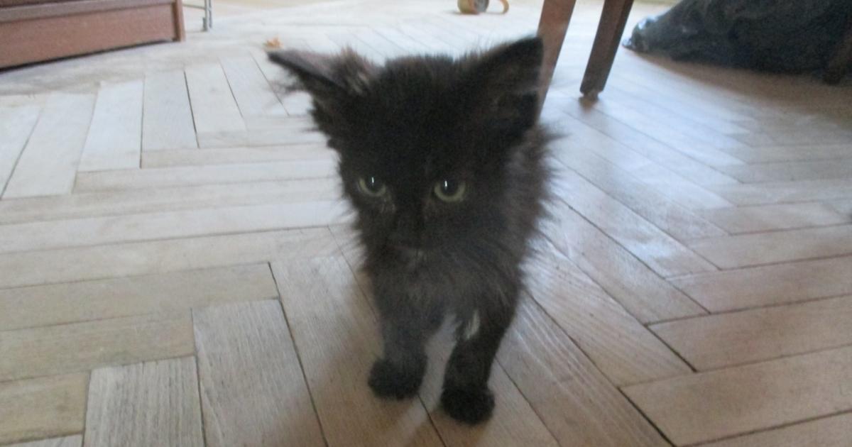 Чёрным котам тоже везёт! Исп…