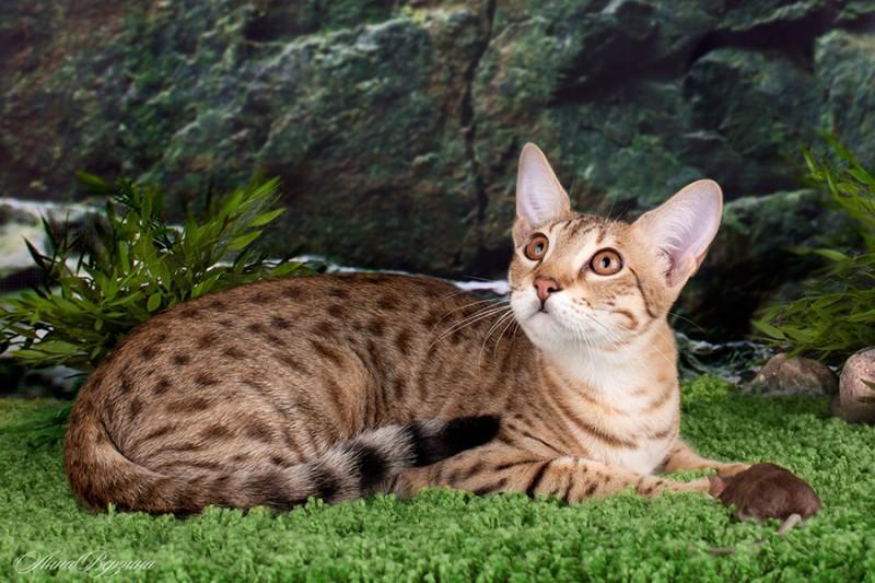 В Ботаническом саду выросли экзотические кошки