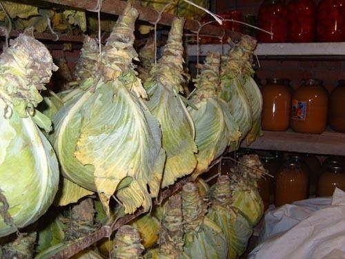 Хранение капусты. Фото с сайта //img0.liveinternet.ru