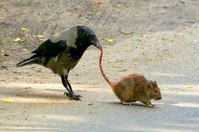 Они и над другими животными издеваютÑÑ!