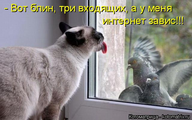 Котоматрица: - Вот блин, три входящих, а у меня интернет завис!!!