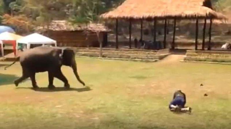 Миролюбивый слон бросился спасать хозяина из драки