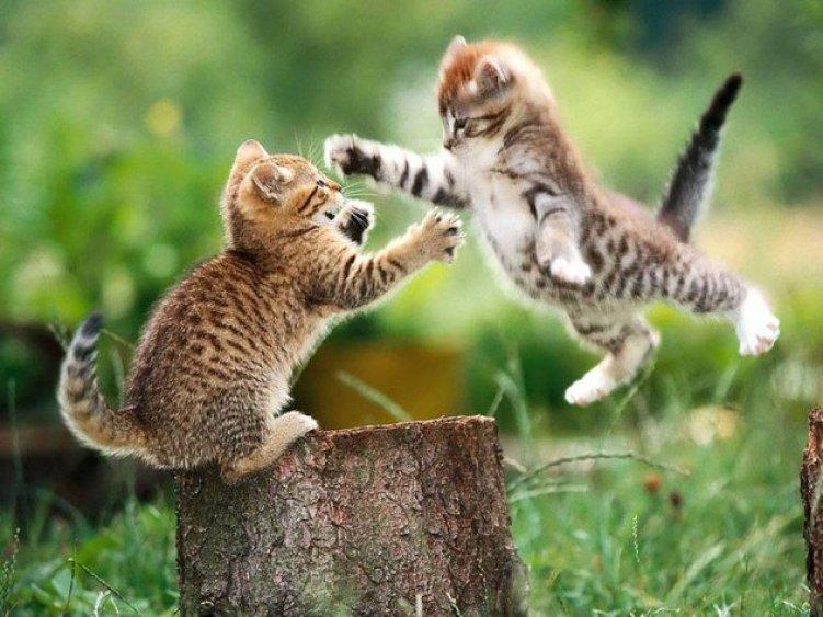 10 странных фактов о кошках
