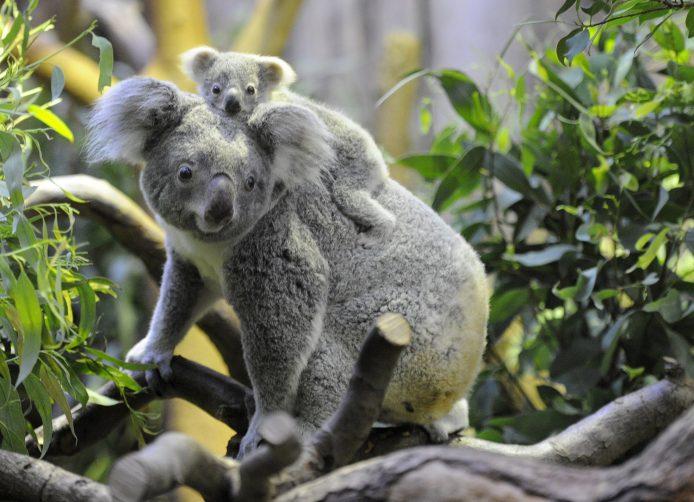 Опасные очаровашки животного мира