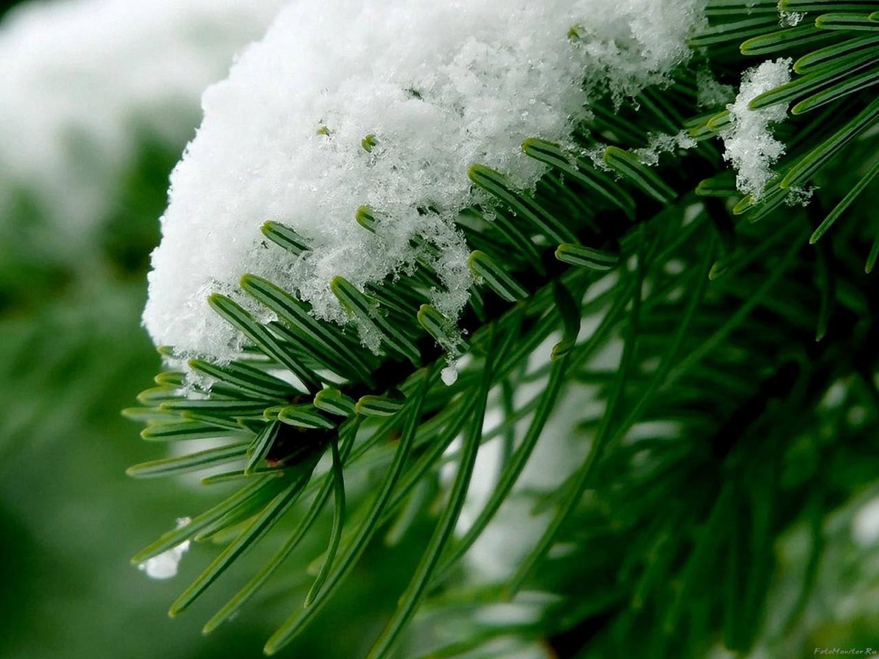 Поиск обоев и изображений: ветки снег Фабрика картинок - Pic…