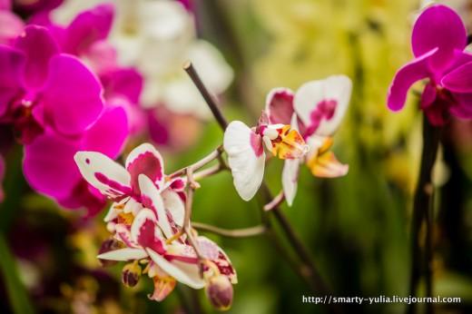 Кекенхоф – это не только тюльпаны!