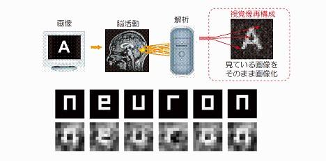Ученые научились «вытаскивать» изображения из головного мозга