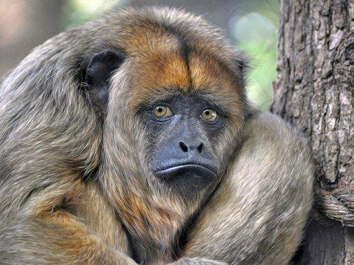 Смешные животные, об эмоциях которых можно судить по их выразительным мордашкам