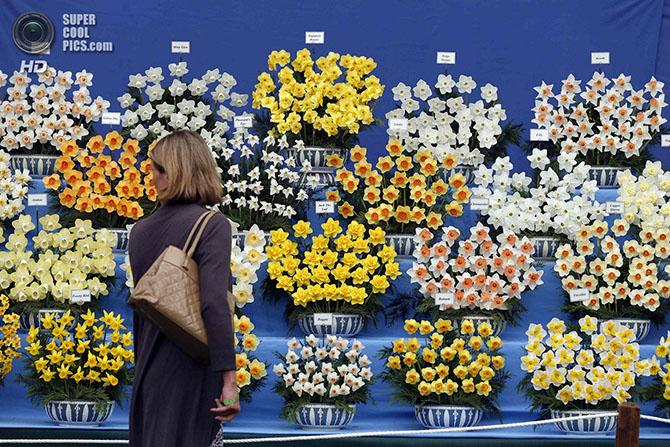 Выставка цветов и ландшафтного дизайна Chelsea Flower Show 2014