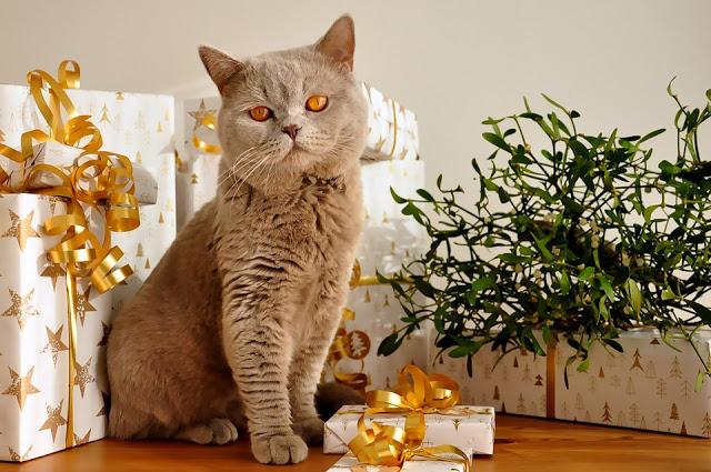Почему он делает подарки, а ей не нравится?