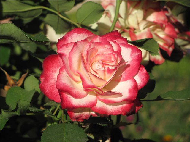 Легенда о розе Альгамбры