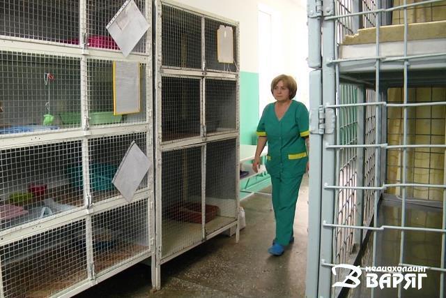 После гневного отзыва в Пинске решили закрыть гостиницу для животных при горветстанции. Обиделись