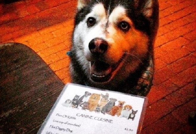 Выход в свет: 5 заведений, где с радостью встретят и накормят вашу собачку!