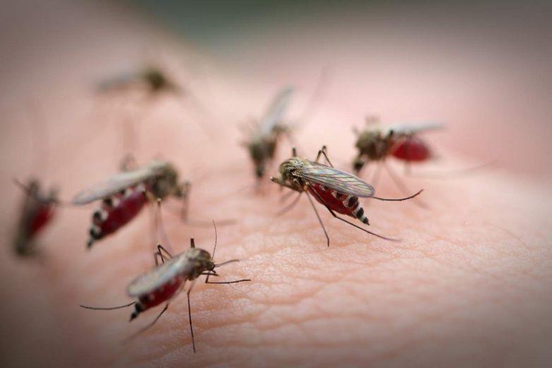 Уплотняемся! Учёные сжали в шприце 240 комаров в один кубический сантиметр