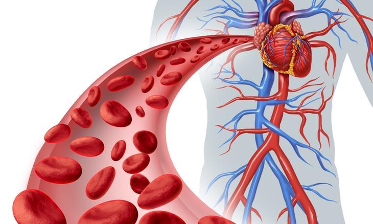 Продукты, помогающие улучшить кровообращение