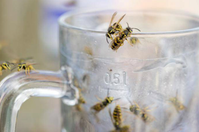 Ученые объяснили, почему осы…