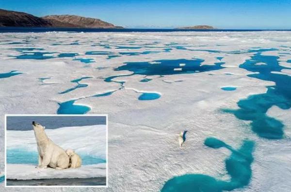 Невероятные изображения показывают величественного белого медведя и ее детеныша