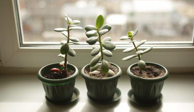 Секретная причина, по которой комнатные растения в доме продолжают умирать