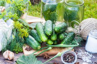 Хрустящий, зеленый, твой. Простые вопросы о соленых и малосольных огурцах