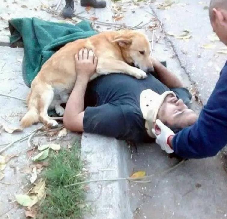 25 трогательнейших доказательств, что собаки любят нас несмотря ни на что