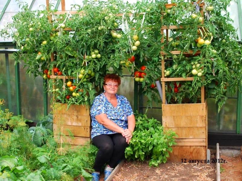 Как вырастить помидоры в бочке