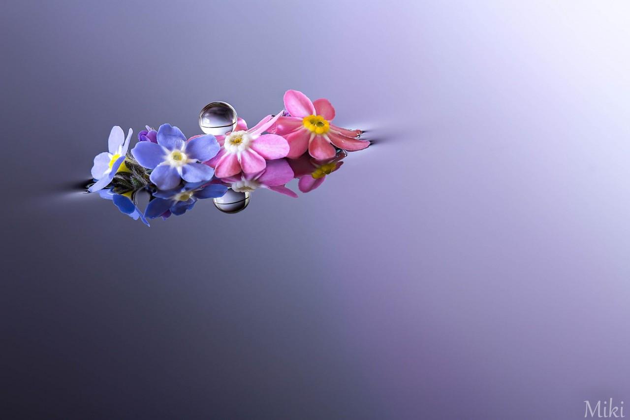 Фотография Best Friends Forever автор Miki Asai на 500px