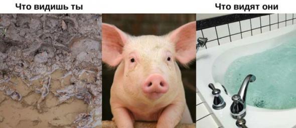 Что и как видят животные?