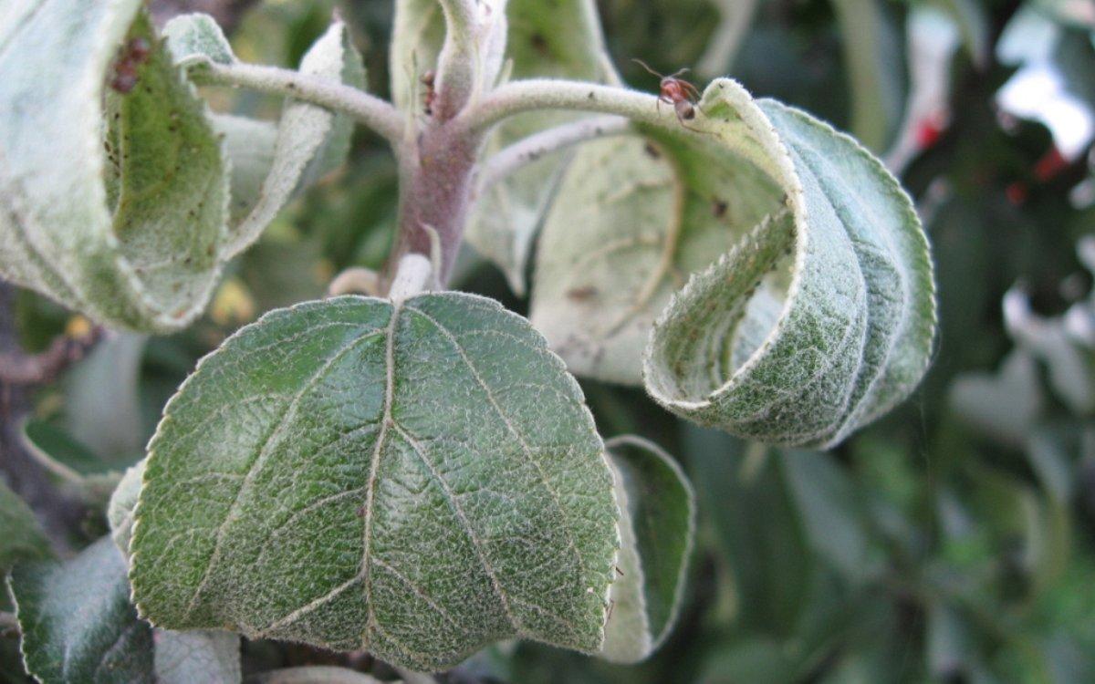 Что делать, если у растений скручиваются листья?