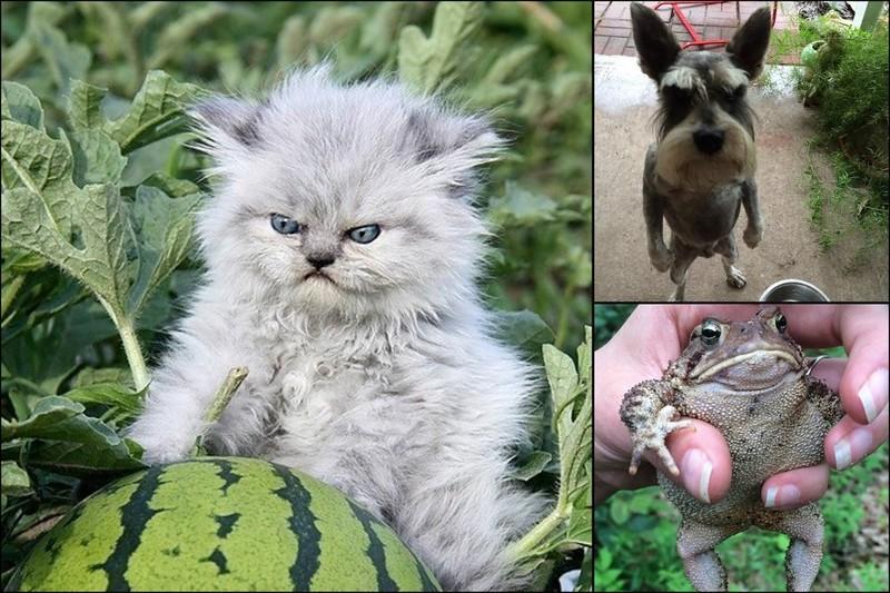Злобные милахи. 16 крошечных, милых и очень злых зверюшек