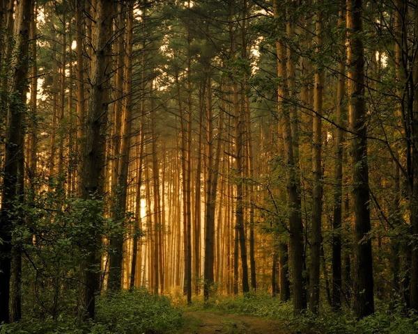 красивая фотография леса